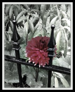 Flowers in the Rain BW