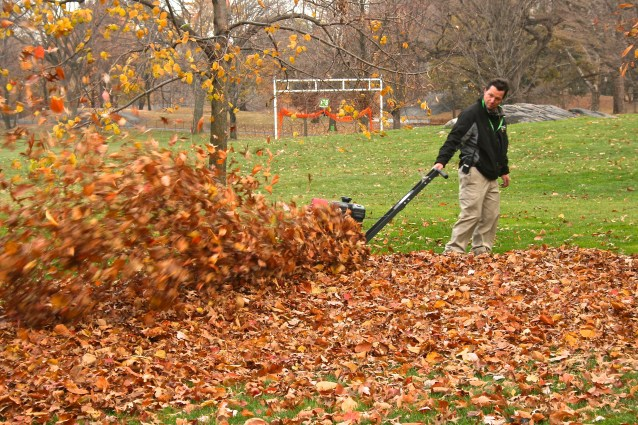 Day 52:3 leaf blower