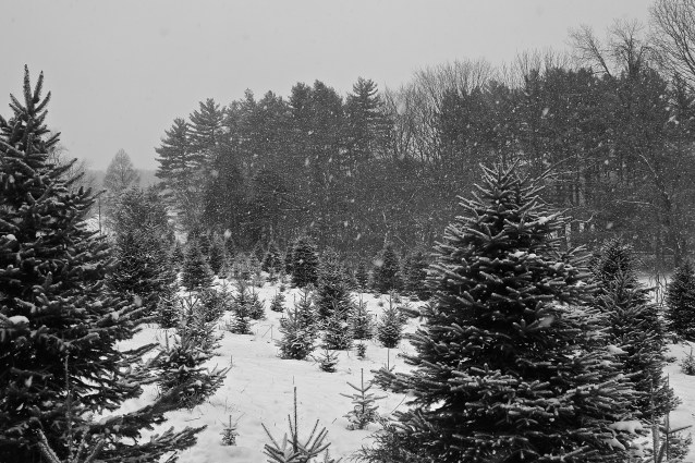 Day 73:3 Walking in a winter wonderland