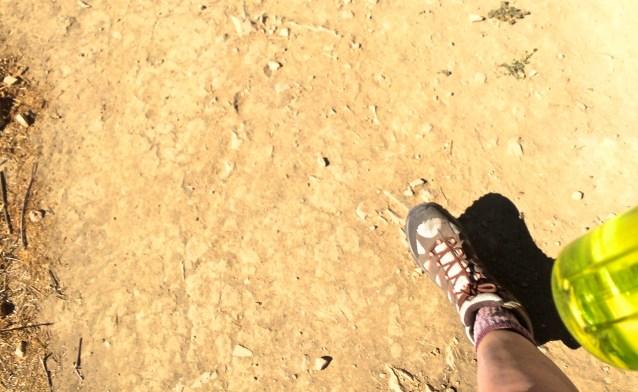 Day 240:3 morning trek
