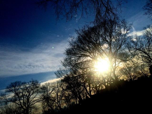 Day 23:4 sun through trees
