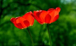 spring-739215__180