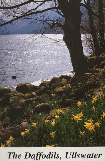Daffodils. The decoration on a post card with the poem from Wordsworth's Dove cottage in the Lake District
