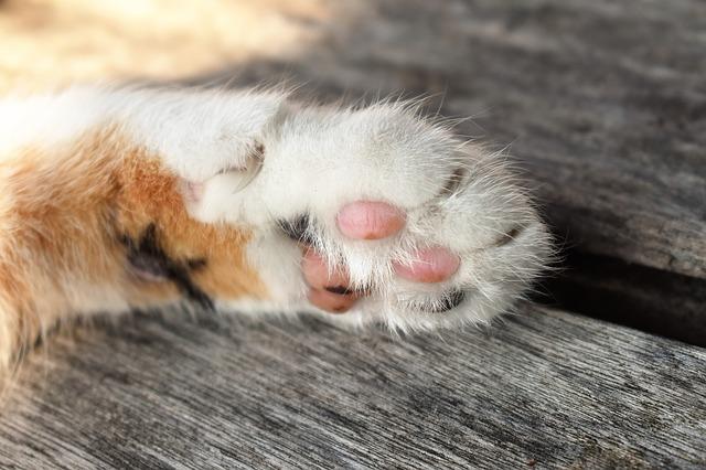 γατος (2)