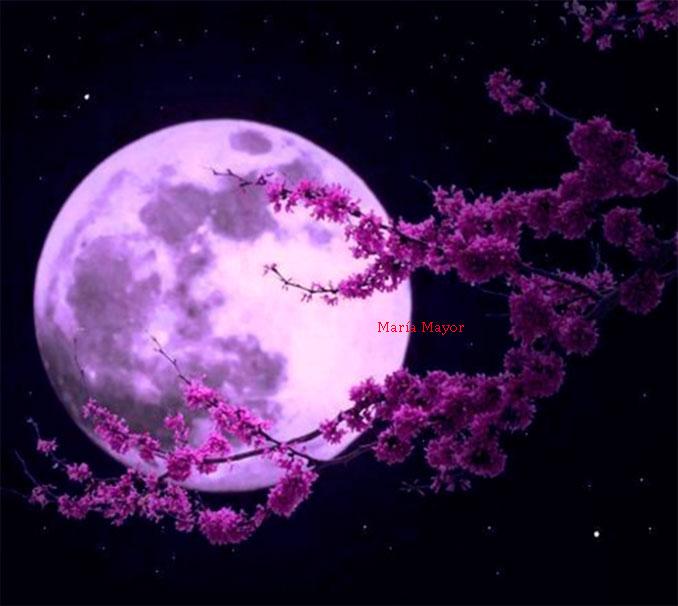 Rituales que se pueden hacer en cada fase lunar.