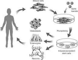 imagesGZB2MB6H.jpgSTEM CELLS - Stem Forte the inteligent supplement.