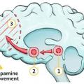 The function of brain reward system