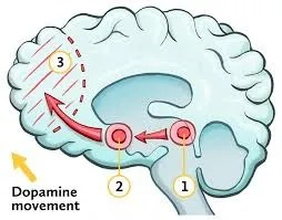 The function of brain reward system