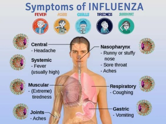 Influenza.jpgFLU 300x225 - We Can Prevent Outbreak Go to Pandemia
