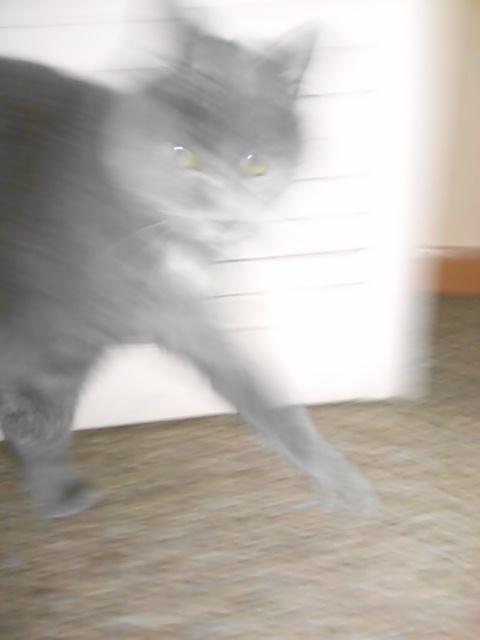 Caturday Katya runs