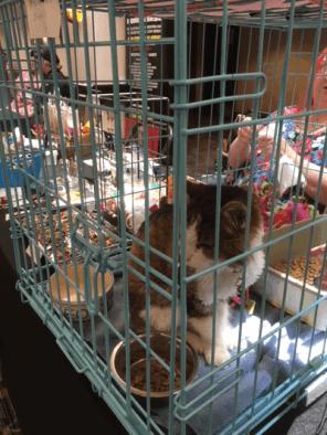 Deaf eldercat raising money for a shelter