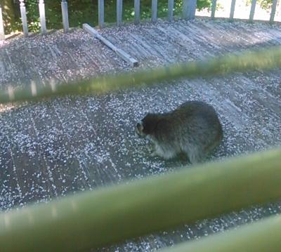 Visitor3