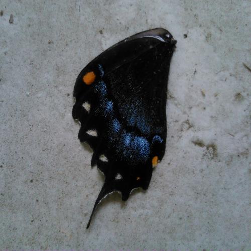 butterflybit2