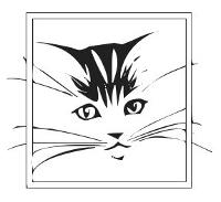 cat-01