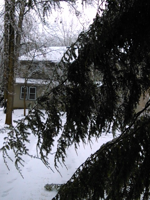 ice weighs down branches