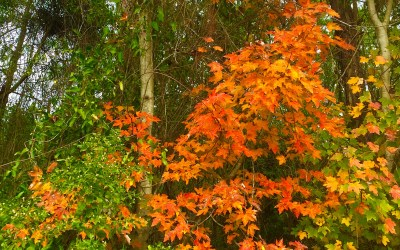 Fall Foliage and Blog Break