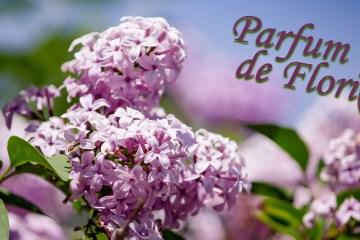 Parfum de Flori(i)