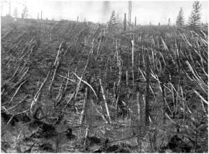 Photograph of Tunguska days after the explosion