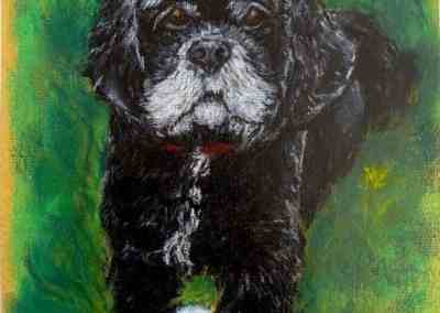 Custom portrait of the American cocker spaniel Pastel on color paper by © MariAnna MO Warr