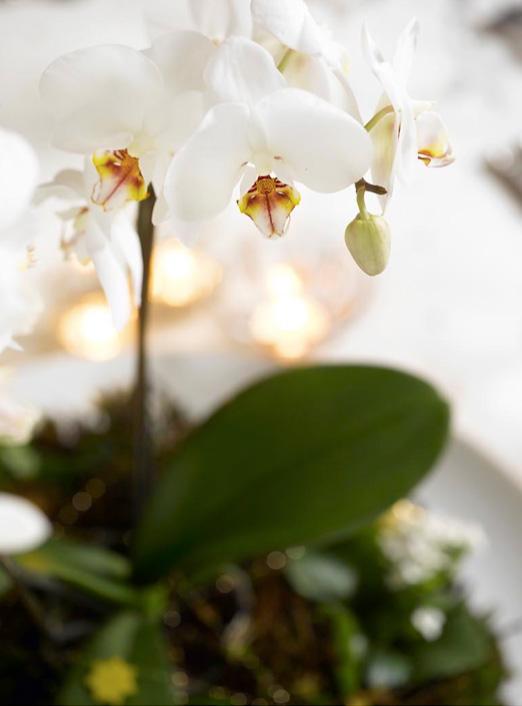 Detalj av Ingeniørfruens blomsterdekorasjon til nyttårsbordet