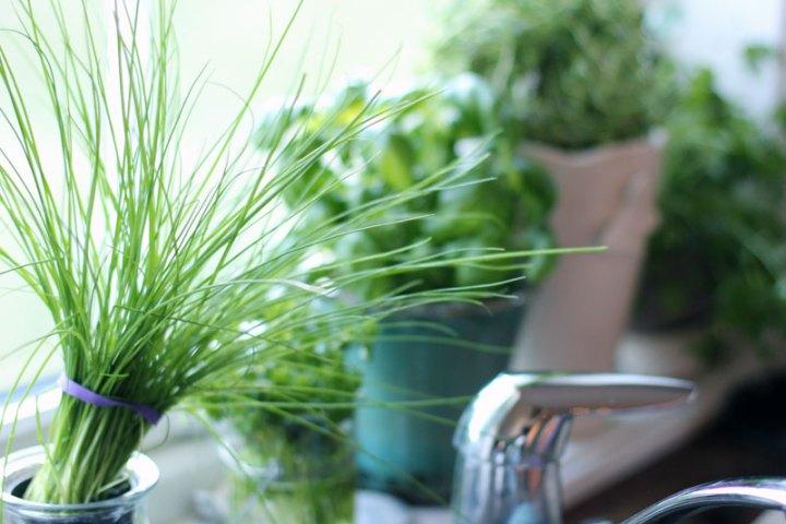 Naturlig mat på kjøkkenet hos Kamilla Glomsrud Hill