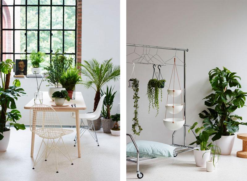 Mange måter å bruke planter på