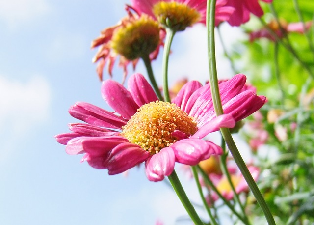 Vanning av sommerblomster og blomsterbed i hagen i ferien