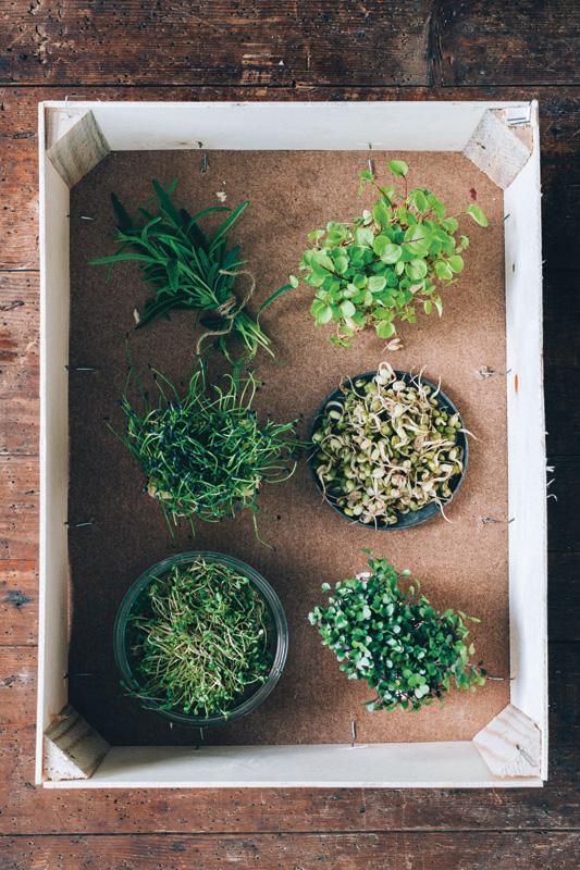 Slik spirer du frø og bønner - oppskrift fra boka Julies grønne kjøkken