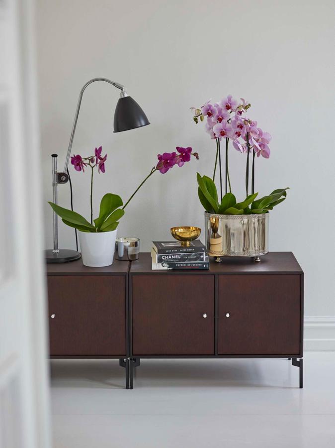 INTERIØRTIPS - INSPIRASJON Orkideer i alle rom