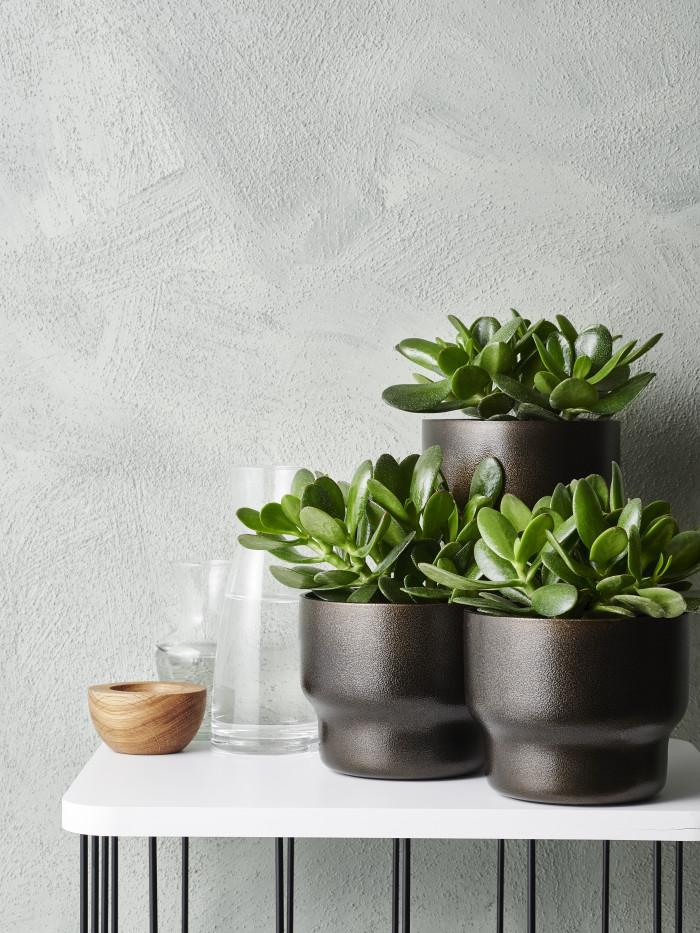 INTERIØRINSPIRASJON Grønne planter for god helse - Pengeplante