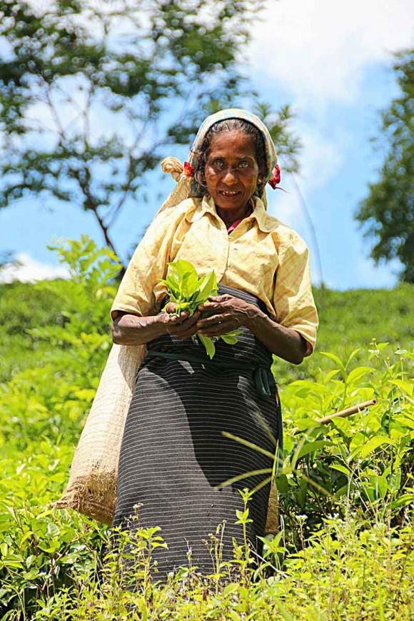 REISETIPS Hit reiser du i 2016 Sri Lanka