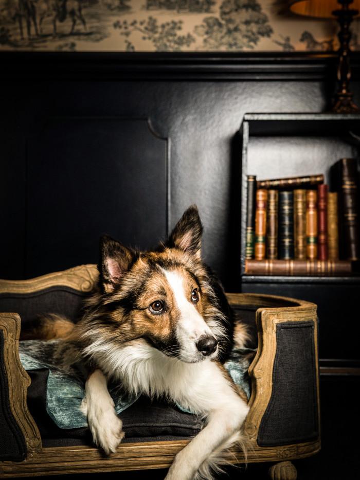 REISETIPS - Ta med hunden på reise