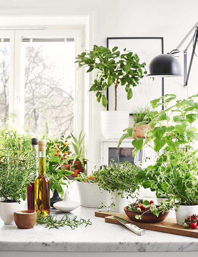 Slik dyrker du urter innendørs