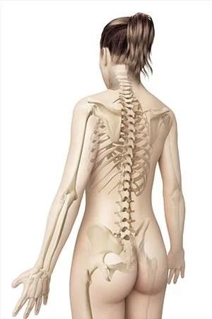 kinesiologie le squelette les articulations