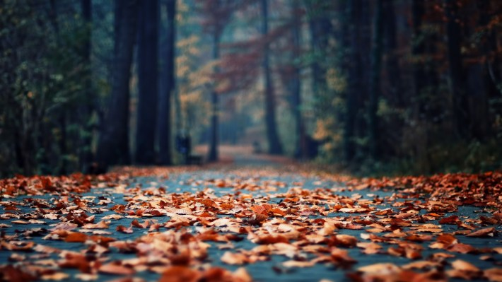 autumn-road-desktop