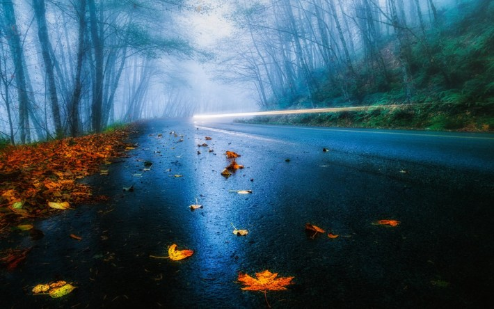 usa-road-autumn-rain-fog-foliage-forest-trees-light_1280x800