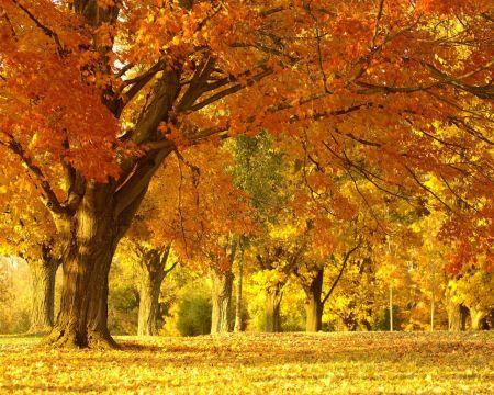 fotos paisajes de otoño-d12