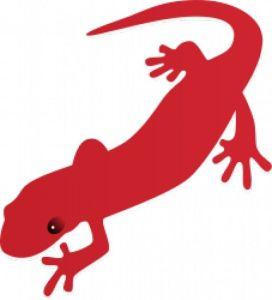 salamandra_17-1111062855
