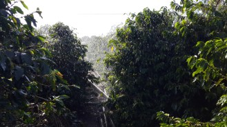 Rain effect of the irrigation with sprinklers