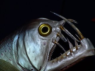Пугающая рыба