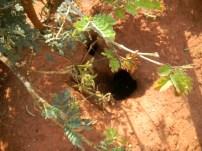 Eingang Termitenhügel