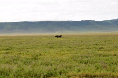 Rhino Zweisamkeit