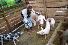 Schweinewirtschaft