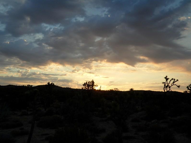 A beautiful sunset at Joshua Trees, California.