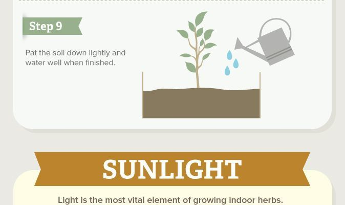 How to Grow Your Own Indoor Herb Garden #infographic