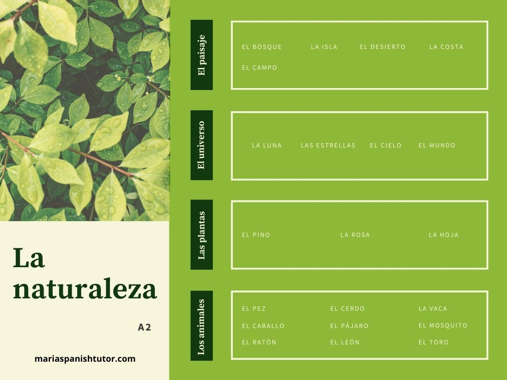 Learn The Vocabulary For The Nature In Spanish