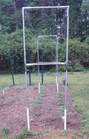 The tomato trellis is made from 3/4 inch emt pipe and is 7 feet tall.
