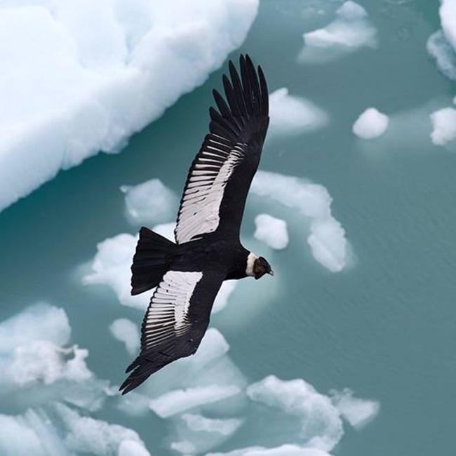 Condor-1