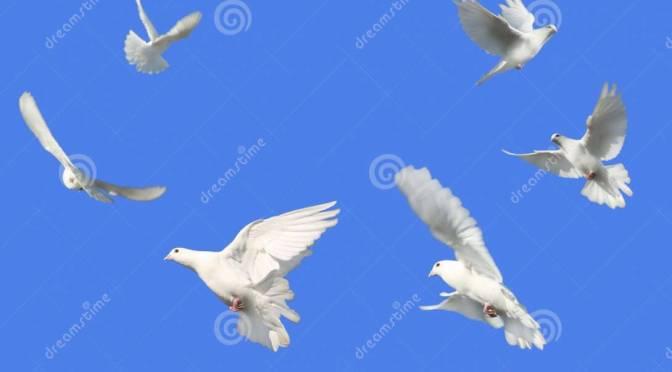 Vredesvlam