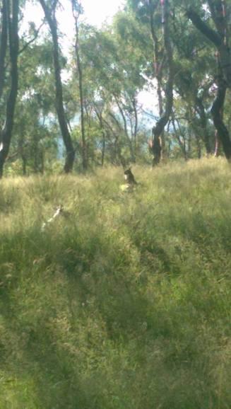 Hare Stump